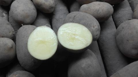 Prodej brambor na uskladnění